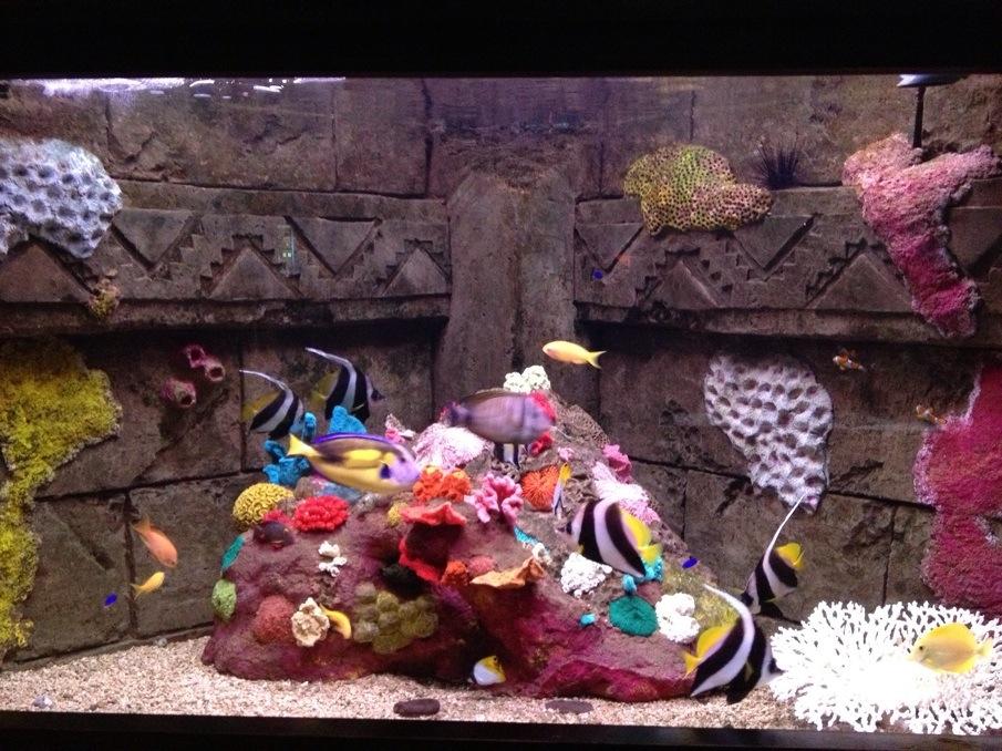 aquarium dingle